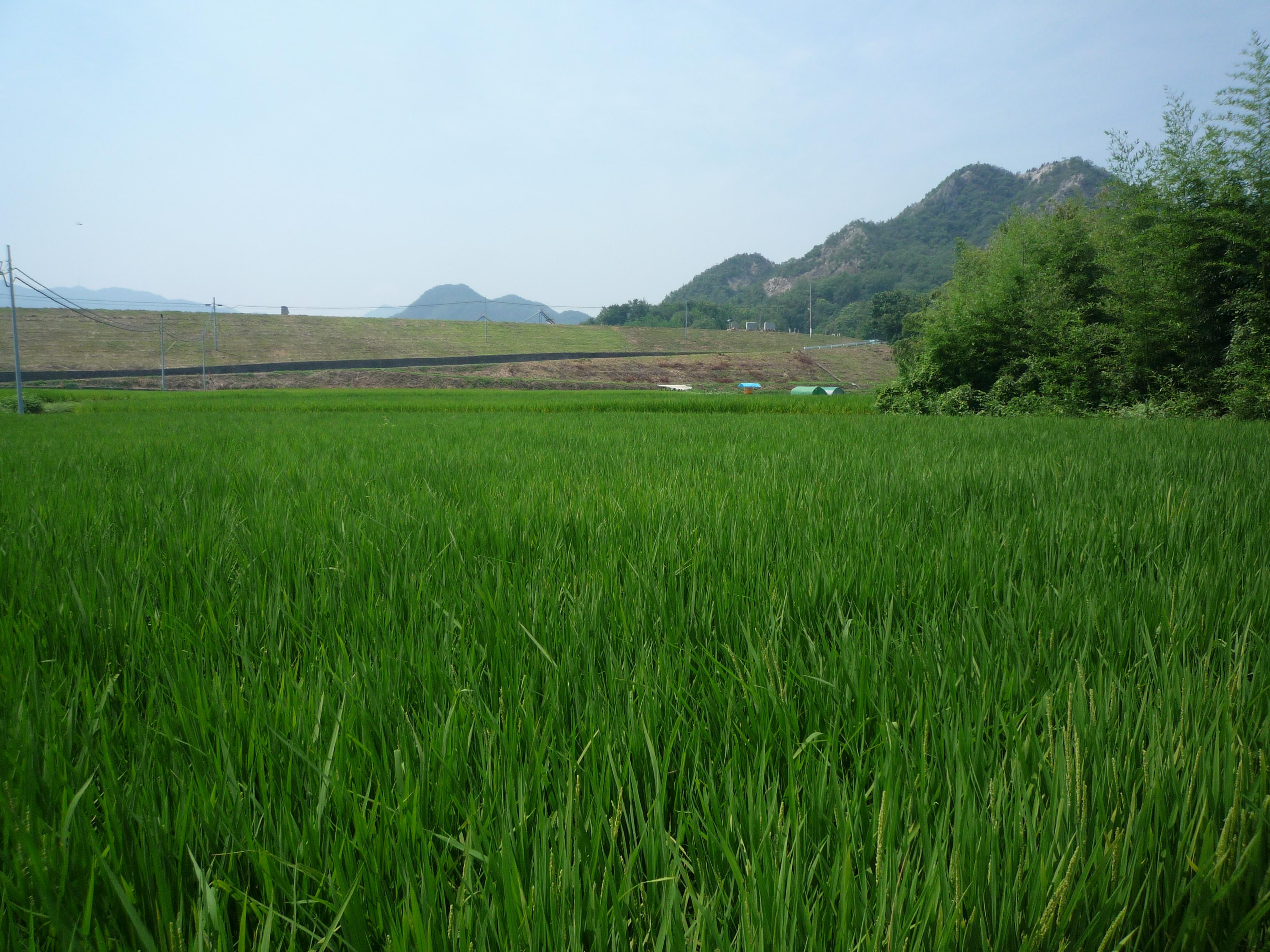 日本に残る田園風景